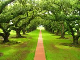 benessere, natura e terapia asistita dalle piante